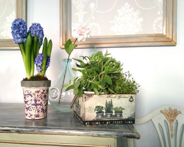 vignette including herbs and hyacinths